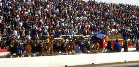 The famous Clydesdales gave the Pomona fans a look at a different kind of horsepower.